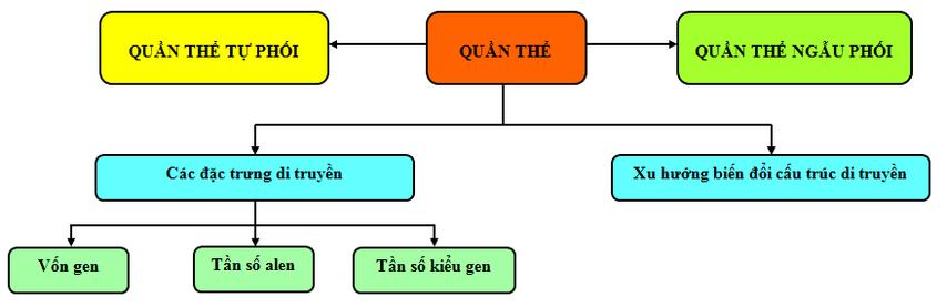 Đặc điểm di truyền của quần thể tự thụ phấn và quần thể giao phối gần