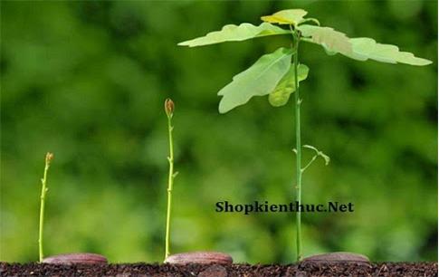 Sinh trưởng ở thực vật