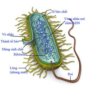 Cấu tạo của tế bào sinh vật nhân sơ