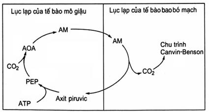 Bài tập tự luận tổng hợp chuyển hóa vật chất và năng lượng ở thực vật ( có lời giải chi tiết) - phần 2