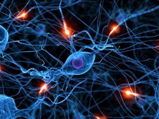 Điện thể nghỉ, điện thể hoạt động sự lan truyền xung thần kinh