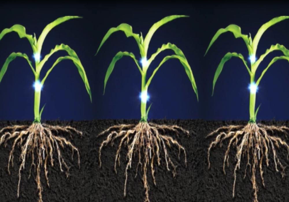 Bài tập tự luận tổng hợp chuyển hóa vật chất và năng lượng ở thực vật ( có lời giải chi tiết) - phần 1