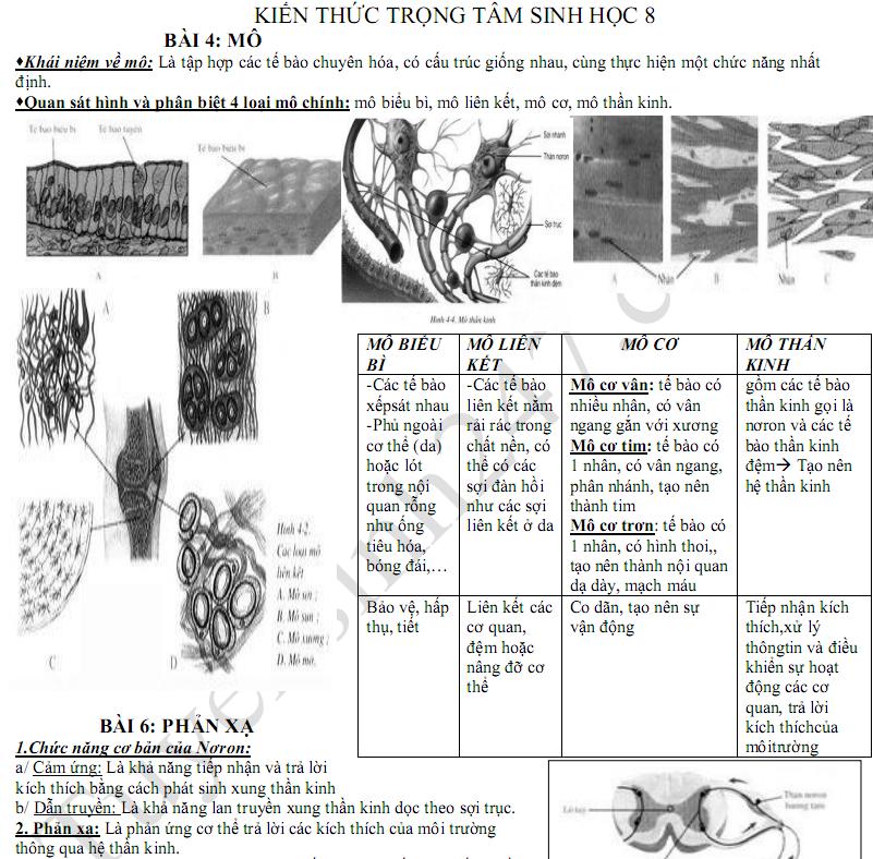 Nội dung ôn tập kì 1 lớp 8 môn Sinh - THCS Trần Văn Đang 2017