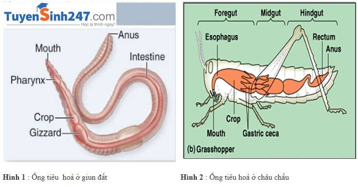 Tiêu hoá ở động vật