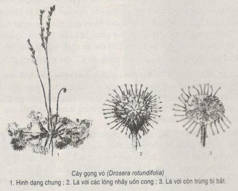 Bài tập tự luận - Cảm ứng ở thực vật - có lời giải chi tiết