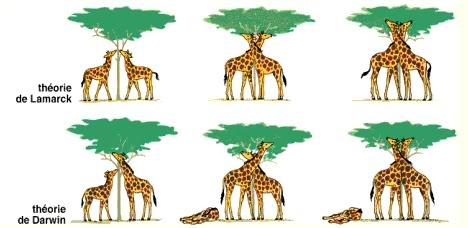 So sánh học thuyết tiến hóa Lamac và học thuyết tiến hóa Đacuyn