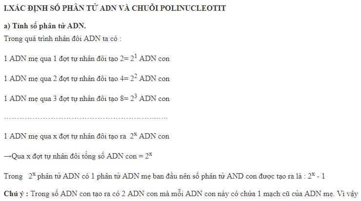 Xác đinh số phân tử ADN và sỗ chuỗi polinucleotit được tạo ra trong quá trình nhân đôi