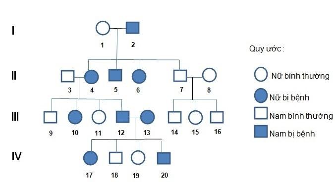 Vận dụng xác suất trong bài toán di truyền phả hệ